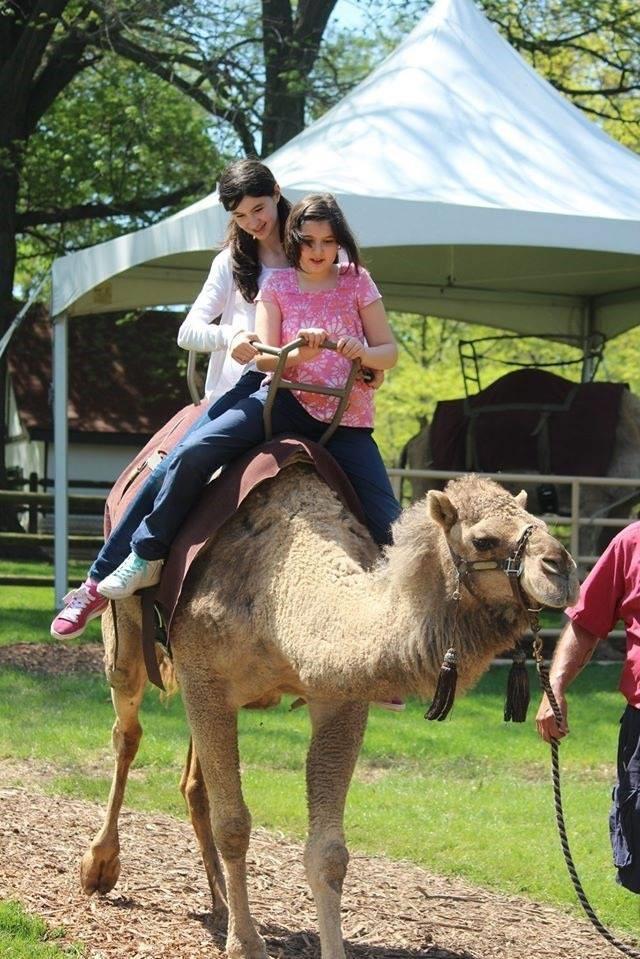 Сара и Ева на камила